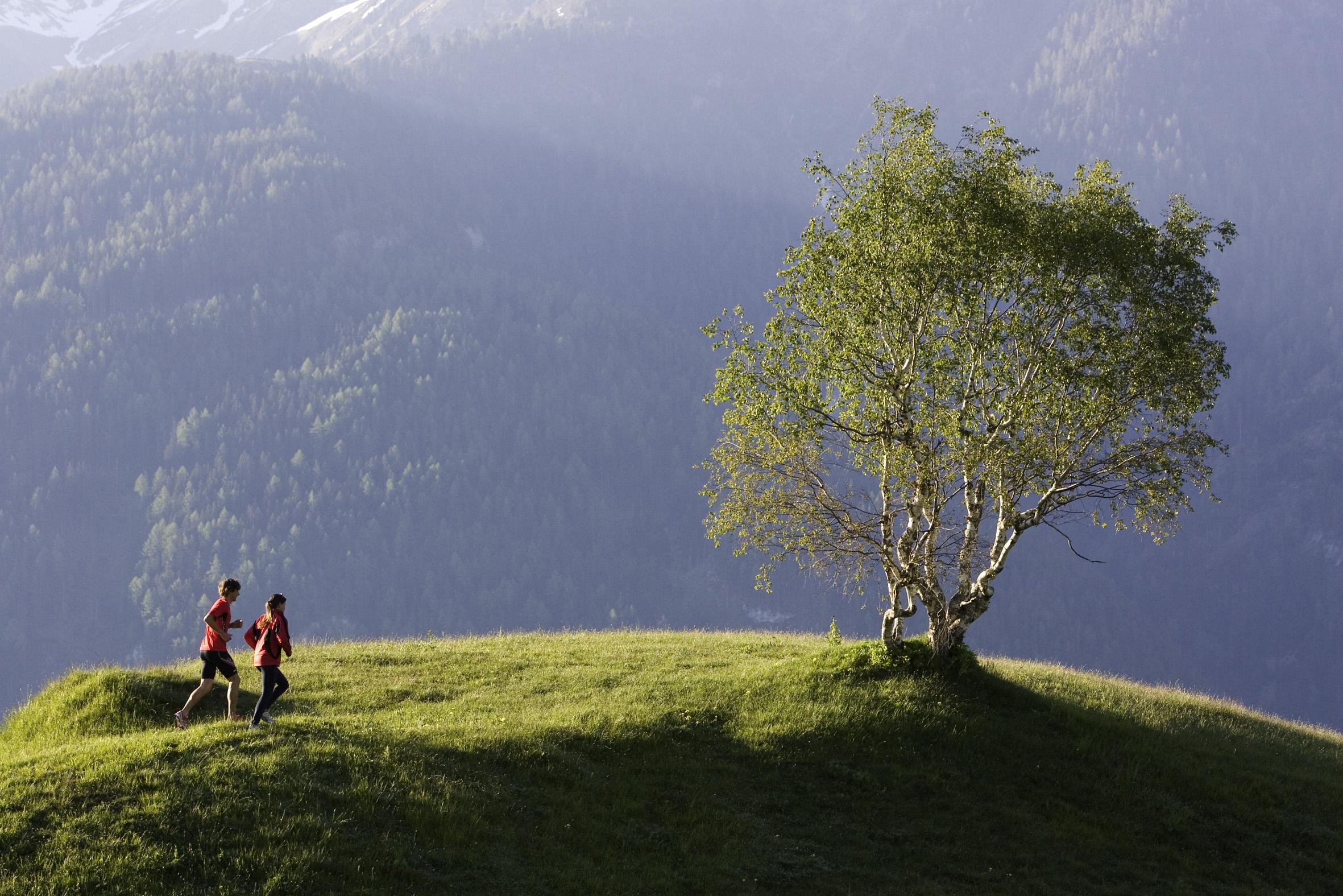 Serfaus Wiese mit Baum